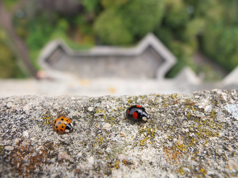 Ladybugs at the top of Cabot Tower